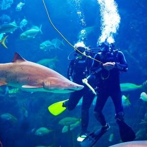 flaquarium-gallery-divers